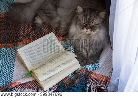 Fluffy Scottish Cat Lies With A Book On A Blanket On The Floor. Open Book Top View. The Concept Of H