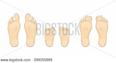 Vector Illustration Of A Baby, Mother And Father Soles. Feet, Sole, Body Part.