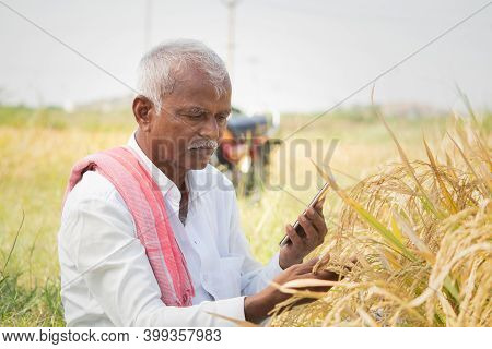Farmer Busy Checking The Crop Yield And Pests By Using Mobile Phone - Concept Of Farmer Using Smartp