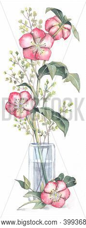 Flower Hellebore Pink In A Glass Vase On A White Background. Handmade Watercolor, Perfect For Cards,