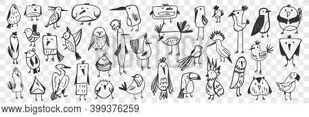 Birds Doodle Set. Collection Of Funny Hand Drawn Various Kinds Of Cute Wild Birds Isolated On Transp