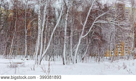 Section Of City Park With Deciduous Trees Covered With Newly-fallen Snow Against Of The Modern Multi