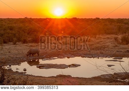 A Black Rhinoceros, Browser, Diceros Bicornis, With A Sunset Backdrop At A Waterhole In Northern Nam