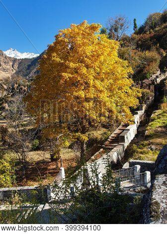 Beautiful Autumnal Tree Horse Chestnut And Stairs Near Joshimath, Indian Himalaya