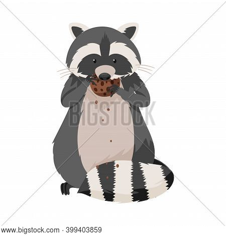 Curious Raccoon Animal With Dexterous Front Paws Eating Chocolate Cookie Vector Illustration