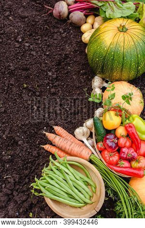 Harvest vegetables on the ground. Potatoes, carrots, beets, peppers, tomatoes, cucumbers, beans, pumpkin, onions and garlic. Autumn harvest farmers