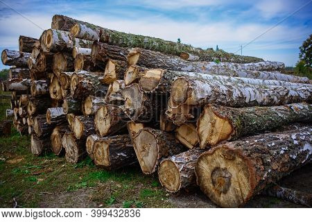 Round Wooden Logs Lie On The Ground. Timber Harvesting. Round Wooden Logs Lie On The Ground. Timber
