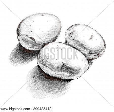 Three Potatoes With Shadows. Black And White Hand Drawn Realistic Illustration On White Background.