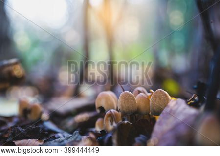 Beautiful Spring Natural Of Wild Mushroom With Blurry Bokeh Sun Rays Shining Background, Selective F