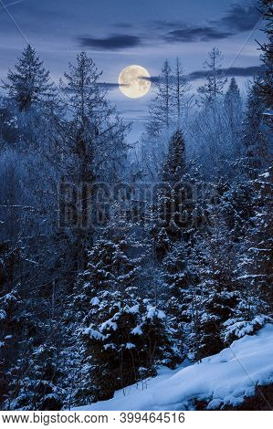 Forest On A Misty Night. Trees In Hoarfrost. Beautiful Winter Scenery In Foggy Weather In Full Moon