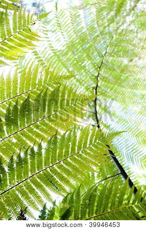 Fern - Rangitoto Island New Zealand