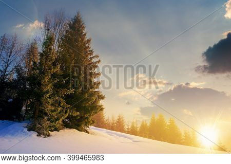 Fog On A Sunny Winter Evening. Spruce Trees Among The Glowing Mist. Beautiful Scenery In Mountains A