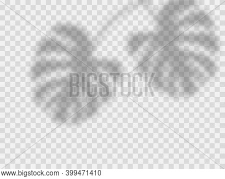 Shadow Overlay Effect. Tropical Leaves Shadows. Vector Soft Shadow