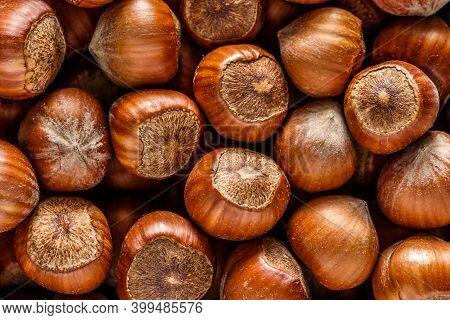 Macro Photo Hazelnut Nuts. Photo Nature Food Hazelnut Nuts In Shell.turkish Hazelnuts. Organic Natur