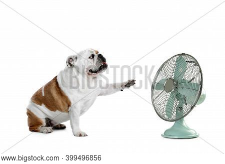 Cute Dog Near Fan On White Background. Summer Heat