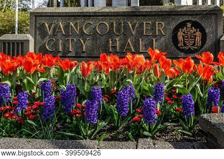 Vancouver, Canada - April 06, 2020: Spring Beautiful Tulip And Geocint Flowers Near Cityhall