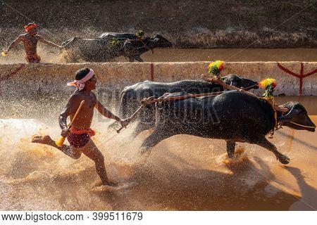 Mangalore, Karnataka, India - December 7, 2019: Kambala or Kambla, an annual buffalo race conducted at paddy fields in Karnataka state, India