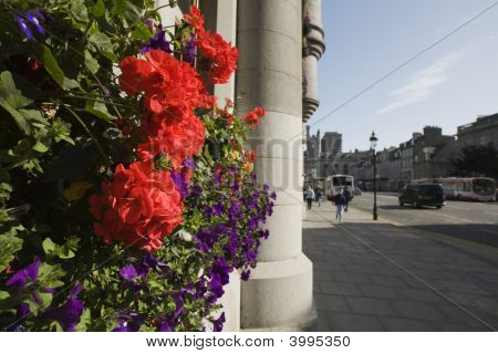 Flowers And Granite