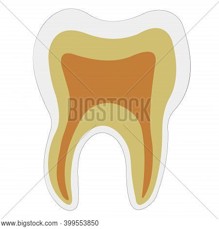 Anatomical Shape Tooth Dentin Enamel Pulp, Vector Logo Teeth Structure For Dental Clinic