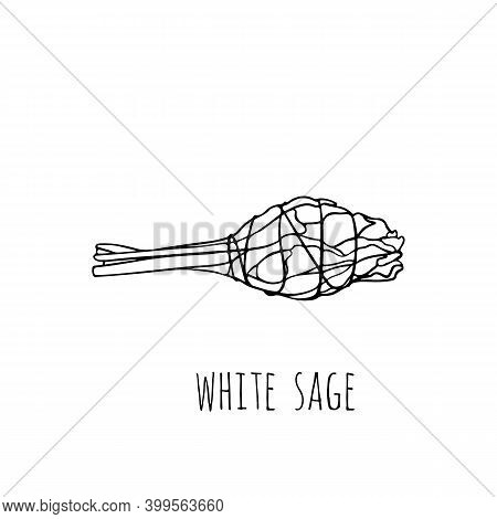 Hand-drawn Bunch Of White Sage. Ancient Incense Of The Indians Of America For Meditation And Spiritu