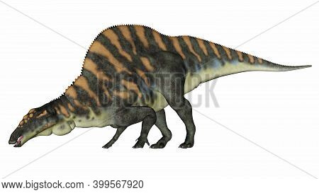 Ouranosaurus Dinosaur Drinking Or Eating Isolated In White Background - 3d Render