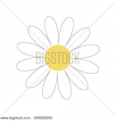 White Daisy Daisies. Love The Card. The Concept Of Growing A Daisy Icon. Flat Design. White Backgrou