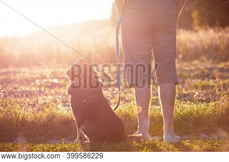 A Man Walking With A Dog In The Field At Sunset. The Man Holding The Dog On A Leash