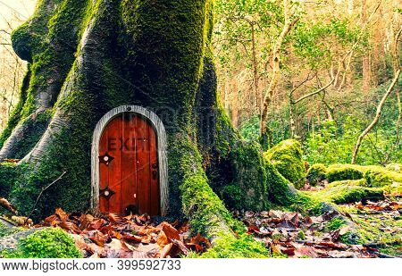 Fairytale Fantasy House In Tree Trunk In Forest. Small Doors In The Tree. Dwarf House.