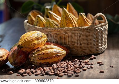 Fresh Cocoa With Cocoa Pods And Cocoa Fruit, Ripe Cocoa Pod And Nibs, Cocoa Beans Setup Background.
