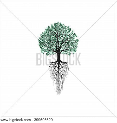 Beauty Family Tree Of Life Oak Banyan Maple With Roots Logo Design Vector Inspiration
