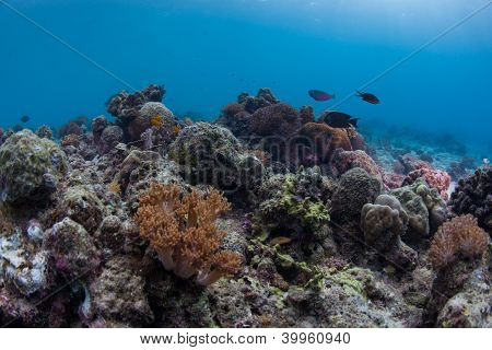 colourful reef scape