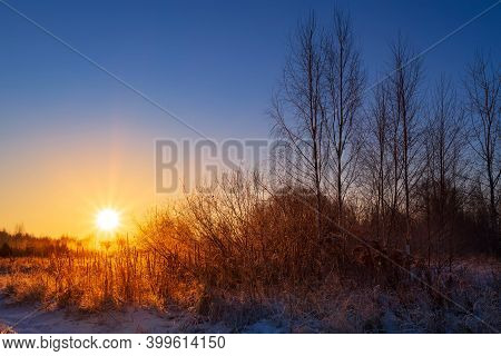 Dry Grass In The Rays Of The Winter Sun At Dawn. Winter Beautiful Landscape.