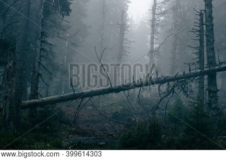 Magical forest with morning sun piercing through fog - dreamy, misty landscape photo