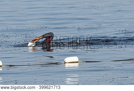 An African American Swimming Outside The Safety Ropes In The Bay Wearing A Wetsuite.