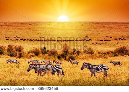 Zebra Group With Amazing Sunset In African Savannah. Serengeti National Park, Tanzania. Wild Nature