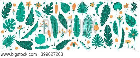 Tropical Jungle Leaves. Exotic Plants, Leaves And Flowers, Banana, Palm, Plumeria And Hibiscus Leave