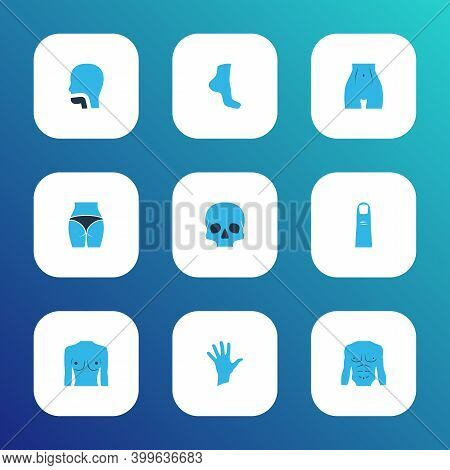 Physique Icons Colored Set With Finger, Belly, Butt And Other Leg Elements. Isolated Vector Illustra