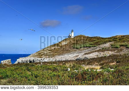 Anacapa Island Lighthouse With Nesting Seagulls At Channel Islands National Park In Ventura County C