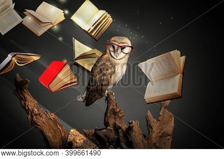 Beautiful Wise Owl And Flying Book In Fantasy World