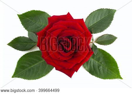 Red Rose Flower And Leaves Arrangement Isolated On White Background, Top View, Design Element For Va