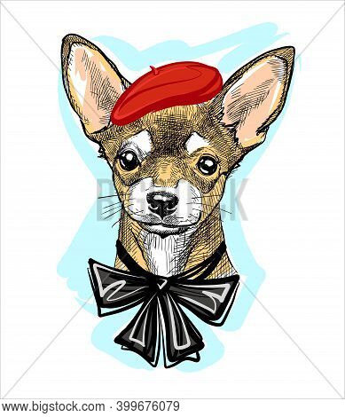 Fashionable Creative Dog In A Red Beret And With A Bow On The Neck. Portrait Of A Chihuahua Head. Il