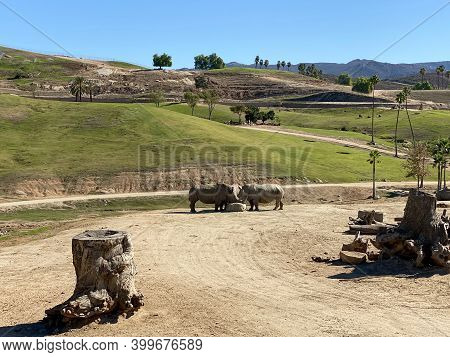 Animal Free Without Cage In San Diego Safari Park Zoo In San Diego, One Of The Largest Tourist Attra