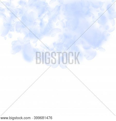 Light Blue Flower Petals Falling Down. Magnificent Romantic Flowers Semicircle. Flying Petal On Whit