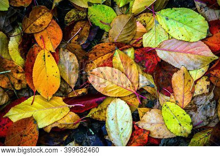 Abstract autumn leafage cover natural background