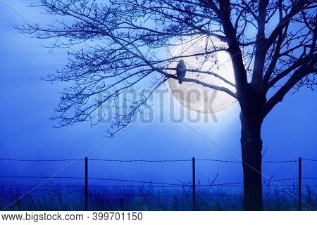 Bird Of Prey Hunting By Moonlight In A Misty Moon  Night. Blue Landscape With Winter Tree And Barbed
