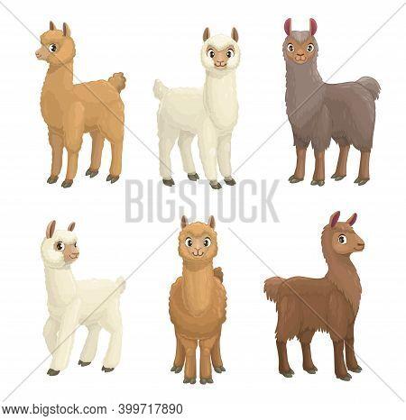 Lama, Alpaca, Guanaco, Llama And Vicuna Animals Cartoon Vector Set. Camelid Mammals With White, Brow