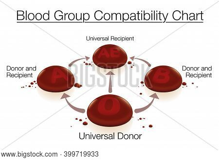 Blood Group Compatibility Chart With Universal Donor 0 And Universal Recipient Ab - Concerning Blood