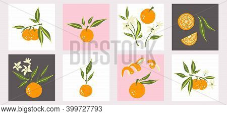 Mandarin Poster Set. Exotic Tropical Orange Citrus Fresh Fruit, Whole Juicy Tangerine With Green Lea