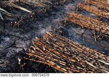 Pile Sugar Cane Burned In The Harvest Season, Sugarcane Fresh, Sugarcane Burn In Field, Sugar Cane B