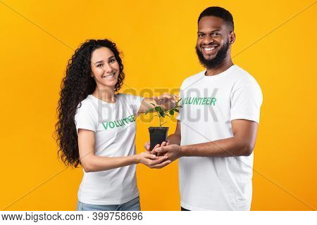 Two Multicultural Volunteers Holding Green Plant Growing In A Pot Standing Smiling To Camera Over Ye